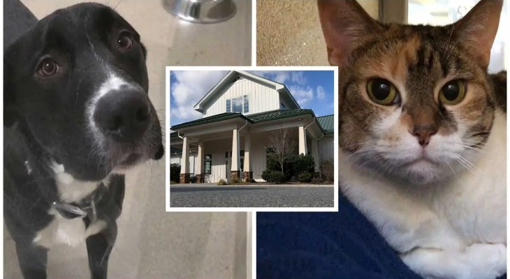 More Lynchburg Humane Society pets fostered in 2020 than 2019