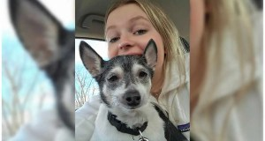 Palatine family mourns the loss of 2nd dog to a coyote attack