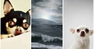 6 Tips for dogs scared of storms
