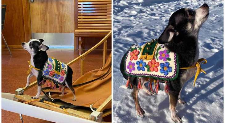 Dog blankets aren't just for sled dogs anymore, meet Rikki