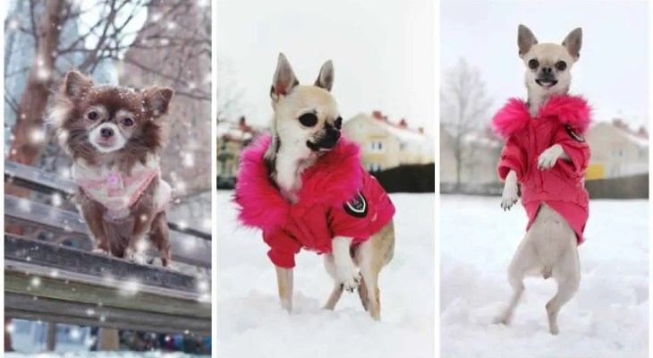 How to keep your pets safe during the cold and snowy winter months