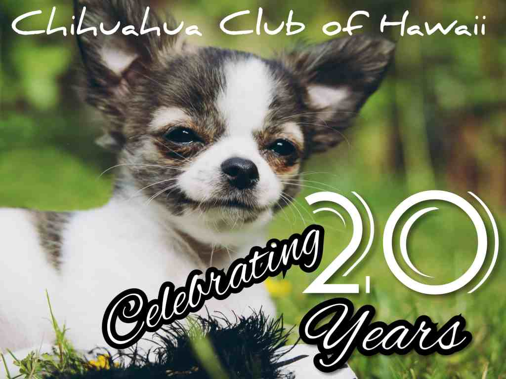Our Club's 20th Anniversary!