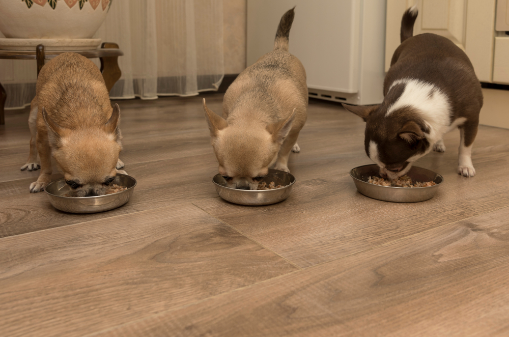 9 Healthy reasons to home-cook for your chihuahua