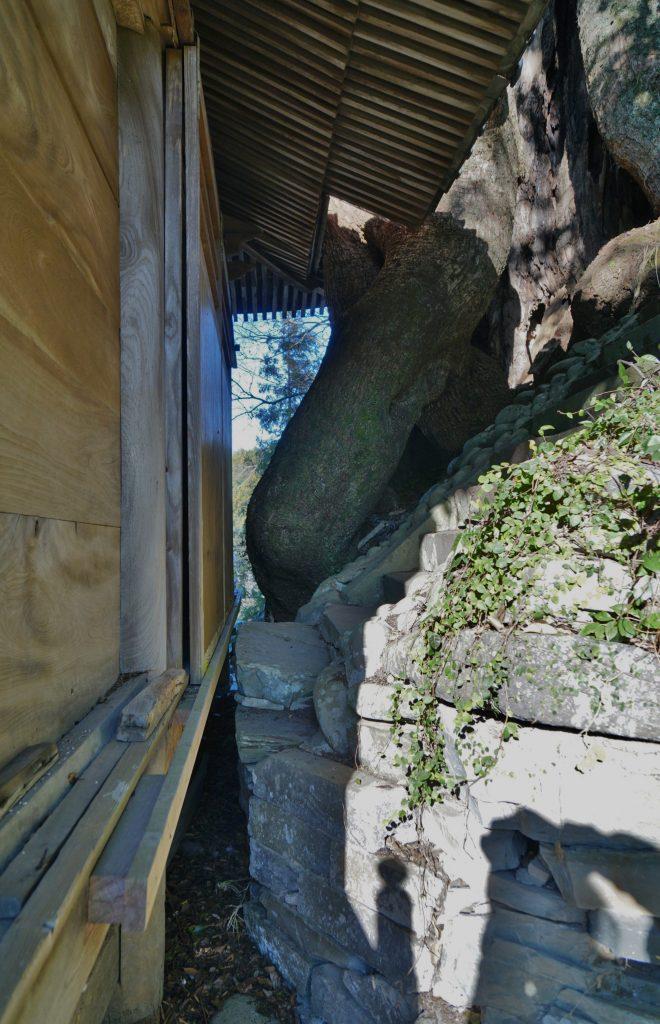 福岡県八女市黒木町湯辺田95 釜屋神社の楠 拝殿 神田への階段