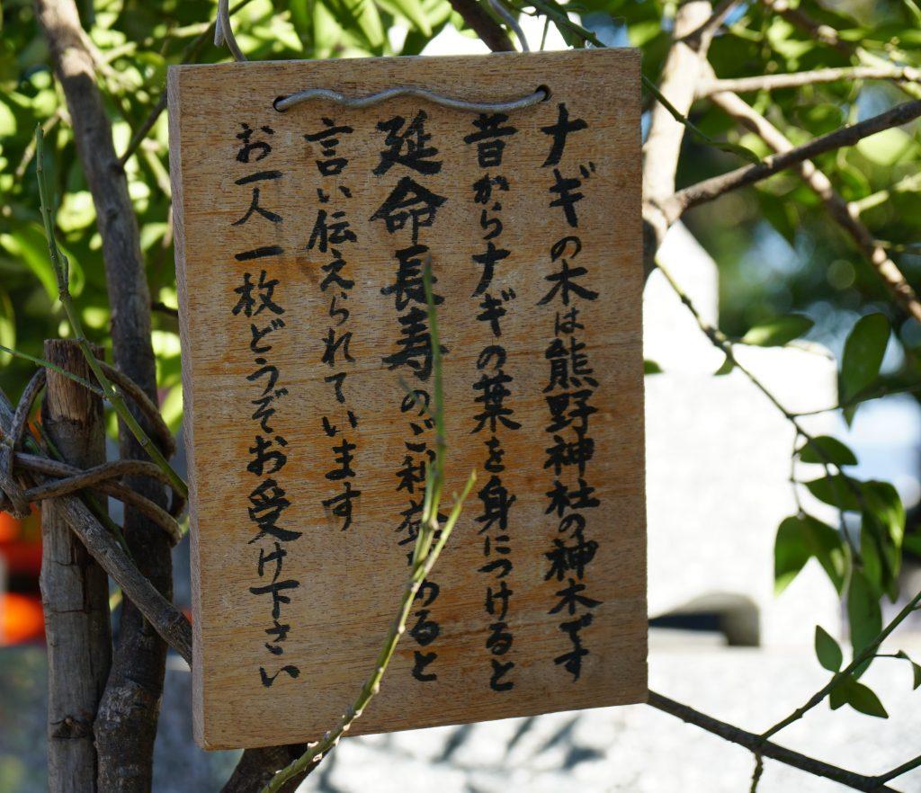 福岡県大牟田市鳥塚町87 熊野神社 参道脇のナギの木 お一人一枚