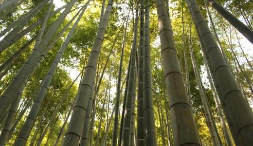 【鎌倉】報国寺で竹林とかを見てきた【神奈川の寺院】