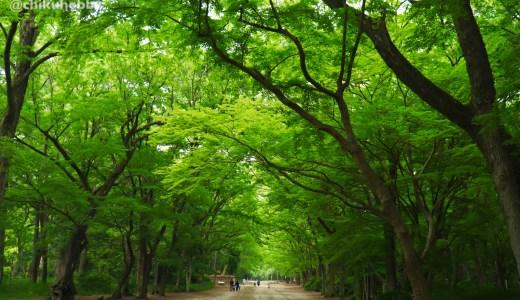 【世界遺産】下鴨神社&河合神社へ行ってきた【京都の神社】