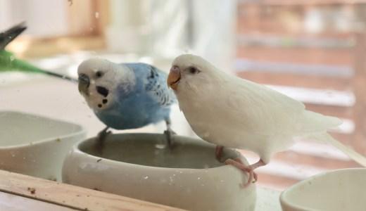 表参道から移転したことりカフェ上野本店へ行ってきた【東京の鳥スポット&グルメ】