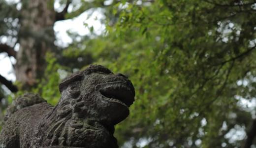 【調布】布多天神社のすぐ近く!大正寺へ行ってきた【東京の寺院】