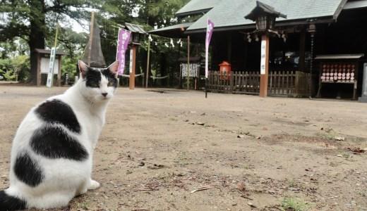 【旭】御朱印が話題!猫に癒される鎌数伊勢大神宮へ行ってきた【千葉の神社】