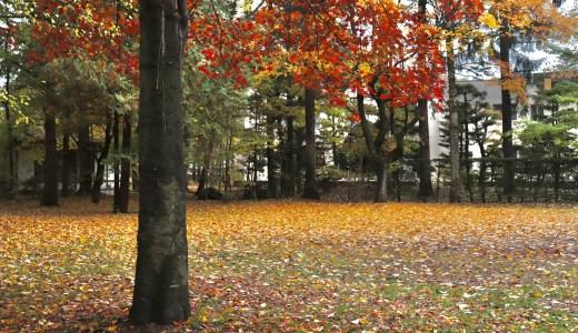 【帯広】紅葉シーズンの帯廣神社&十勝護国神社へ行ってきた【北海道の神社】