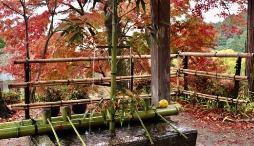 【ちくの西国三十三観音巡り#6】善峯寺へ行ってきた【京都の寺院】