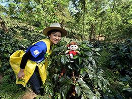 ペコちゃん&ERIKOの旅ホンジュラスのコーヒー農園