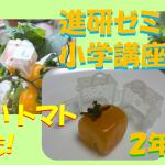 2018年進研ゼミ小学講座2年生のミニトマトで家庭菜園!四角いトマトの育て方