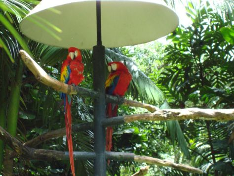 Parrots at Zoo Ave, Costa Rica