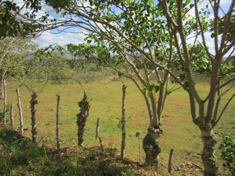 Dominican Republic countryside