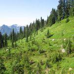 Mt. Rainier National Park Paradise side