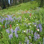 Mt.-Rainier-National-Park-Paradise-side