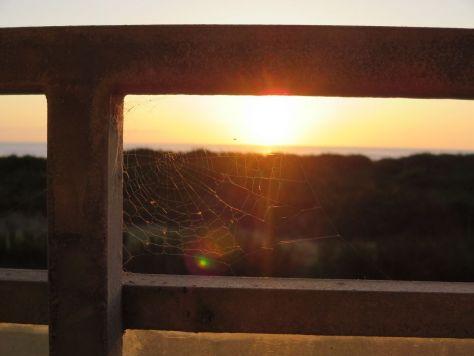 Spooky spiderweb