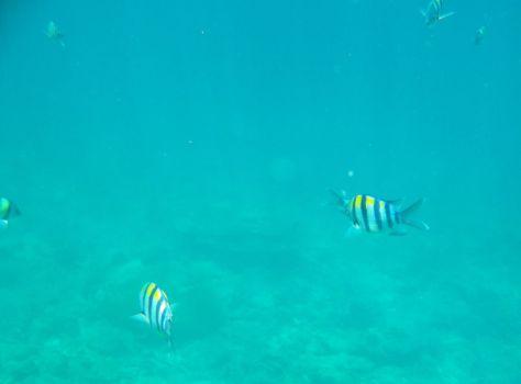 snorkeling koh phi phi Thailand 048