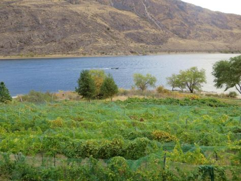 View of the Columbia River Rio Vista Winery Chelan