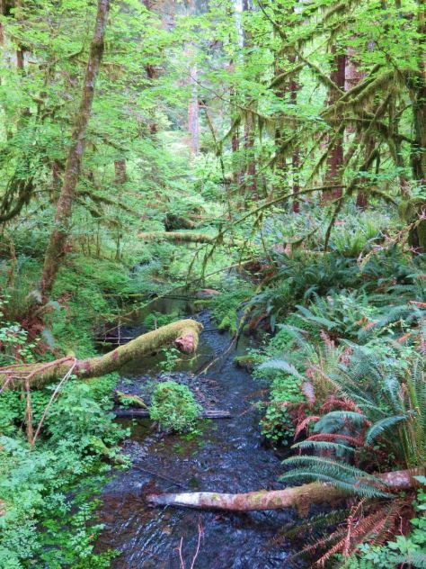 Spruce Nature Trail, Hoh Rainforest
