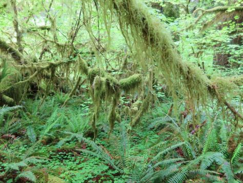 Hall of Mosses trail Hoh Rainforest