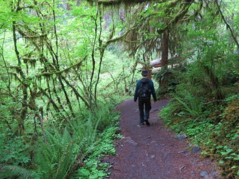 Hoh-Rainforest 130