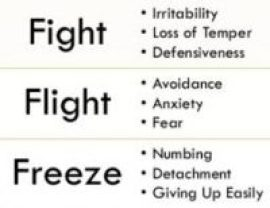 fight-flight-freeze-response