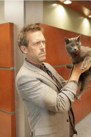 For the last time, I refuse to audition for bloody Cats!