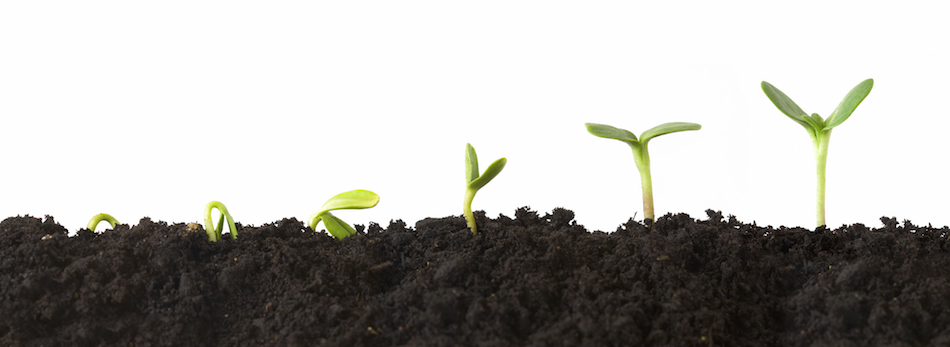 7 Steps To Automatic Growth In Your Children's Ministry
