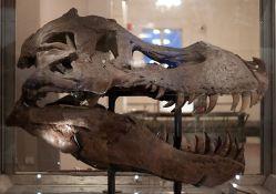 Sue's original skull