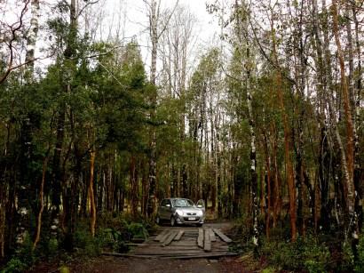 Con el autito arrendado en medio del bosque