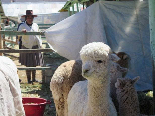 Feria de Huantaro