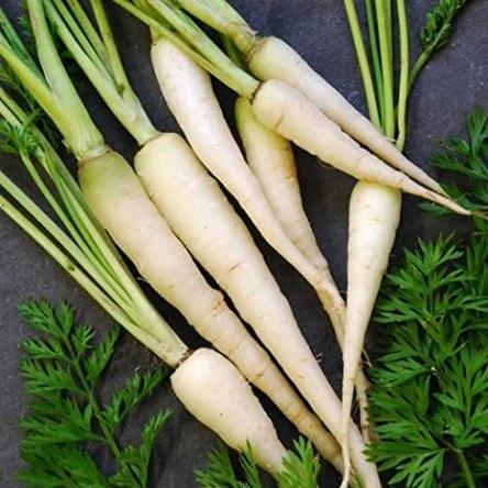 Zanahoria Blanca