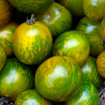 Tomate Verde Tigre