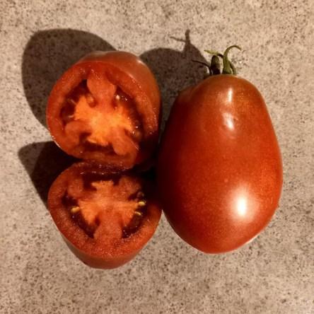 Tomate Zepellin