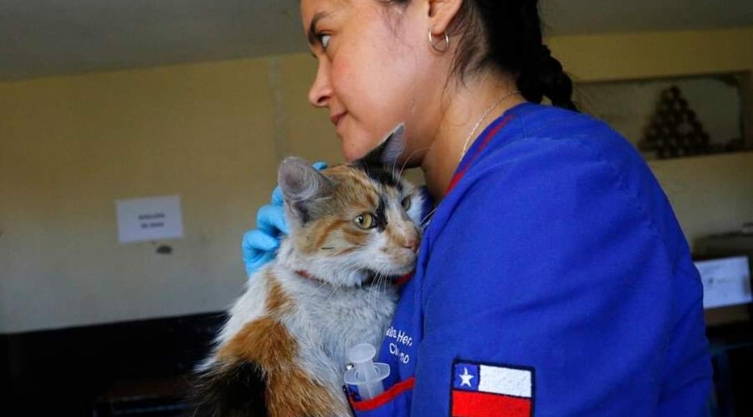 Denuncian NUEVOS CASOS de gatos ENFERMOS por consumo de alimentos: Los síntomas a los que debes prestar ATENCIÓN