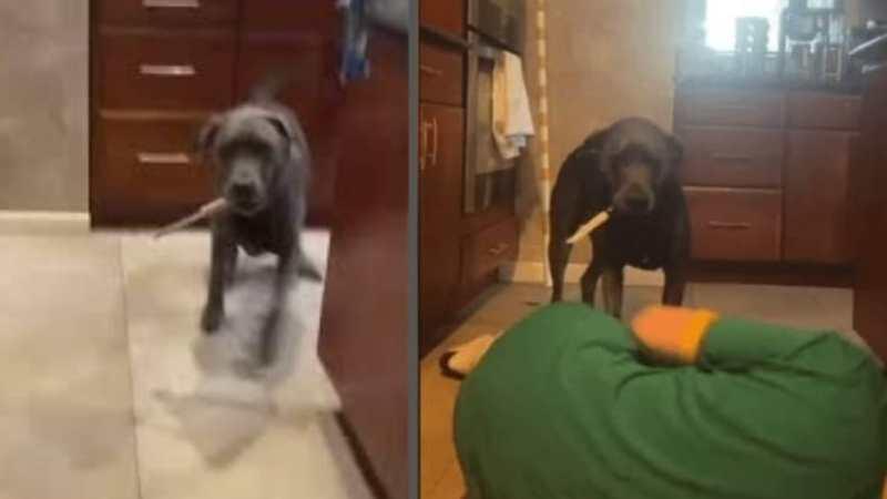 DEL TERROR: Joven se hizo la MUERTA para ver reacción de su perro, éste agarró un CUCHILLO