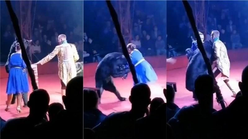 Video registra feroz ataque de un oso a una mujer embarazada en pleno show de circo