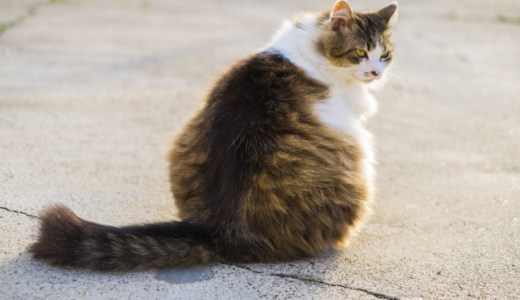 くせ毛が気になるけど猫っ毛で縮毛矯正って大丈夫??