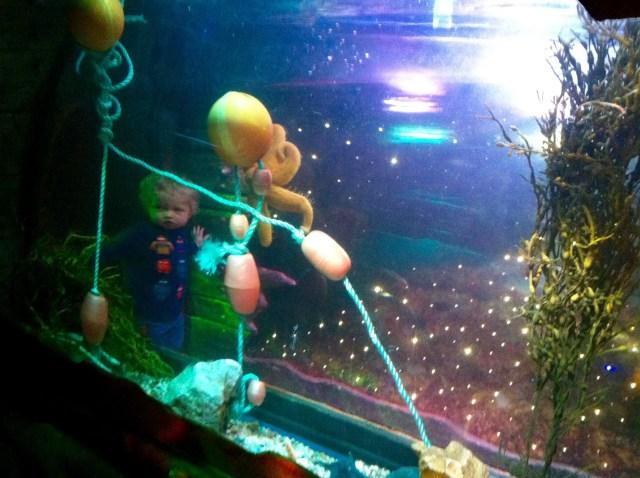Sea stars Blackpool sea life centre