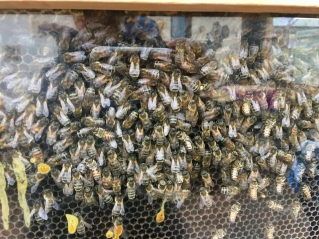 Samlesbury Hall Preston a glass observatory bee hive