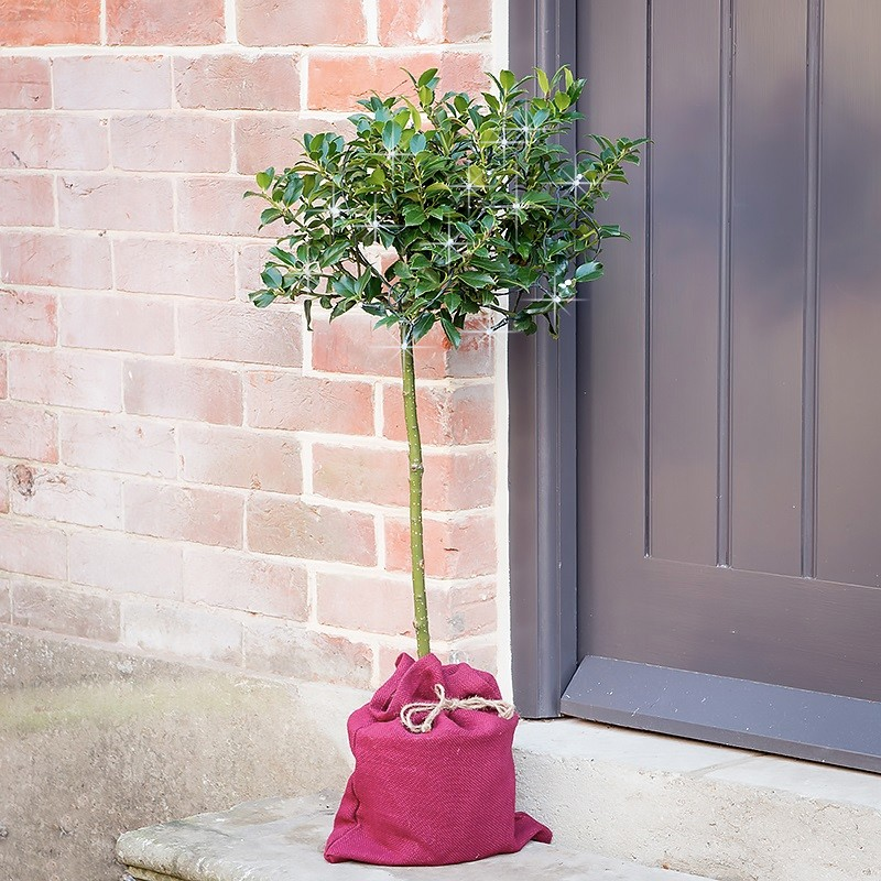Women's gift ideas Christmas holly tree with lights and a burgundy bag