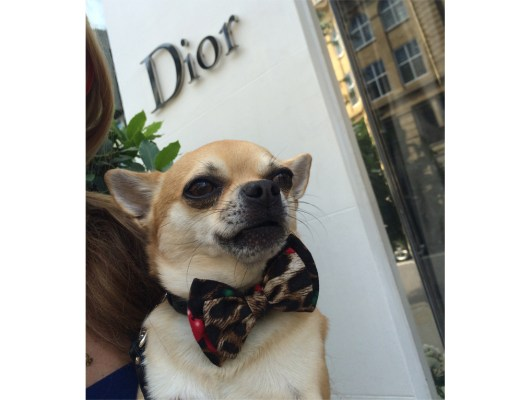 Chilliwawa Stylish Dog at Dior