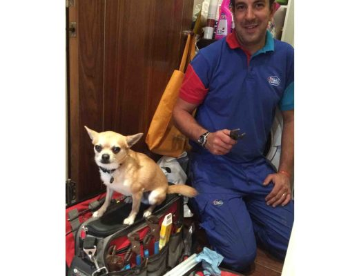 Cute small dog as trainee plumber