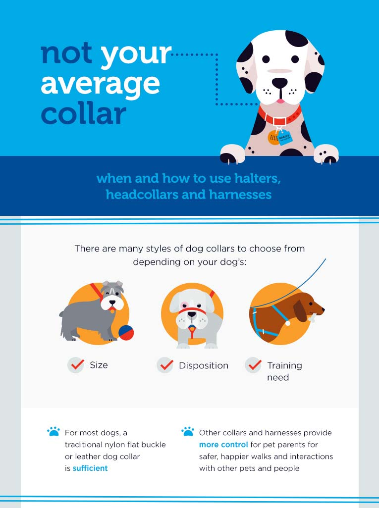 Petco infographic marketing
