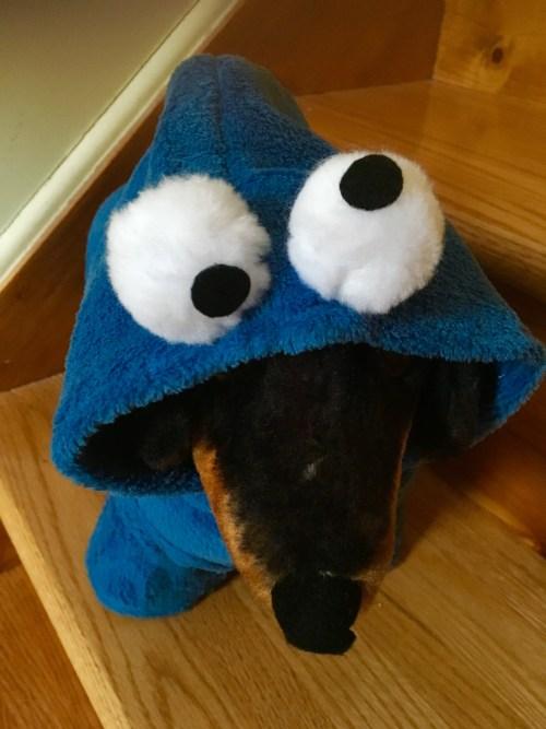 Cookie Monster Dog Halloween Costume