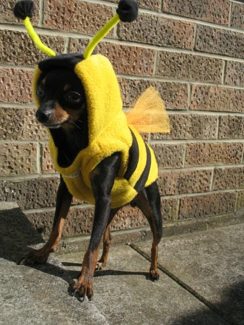 Bumble bee dog costume