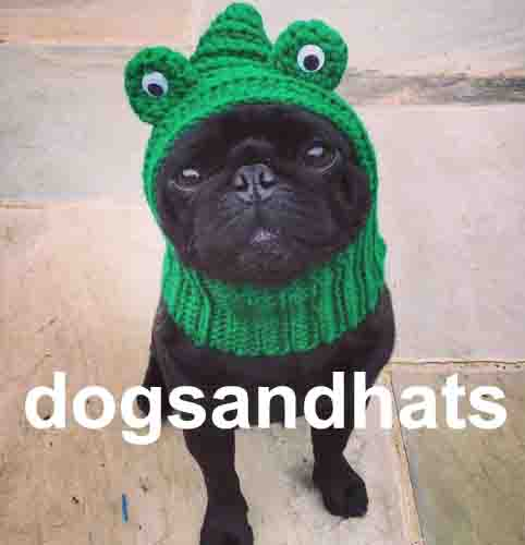 dogsandhats